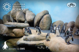 Pocket Pinguins Les bons plans de lApp Store ce mardi 19 juillet 2011