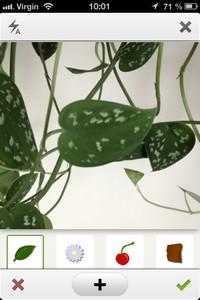 IMG 0331 Lapplication gratuite du Jour : PlantNet   Le Shazam des plantes !