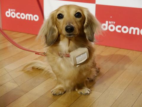 traqueur chien Accessoire : Un traqueur dactivité...pour chien !